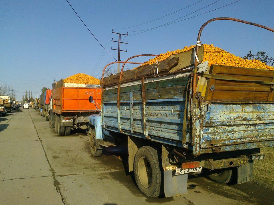 მანდარინით დატვირთული მანქანები ქობულეთში