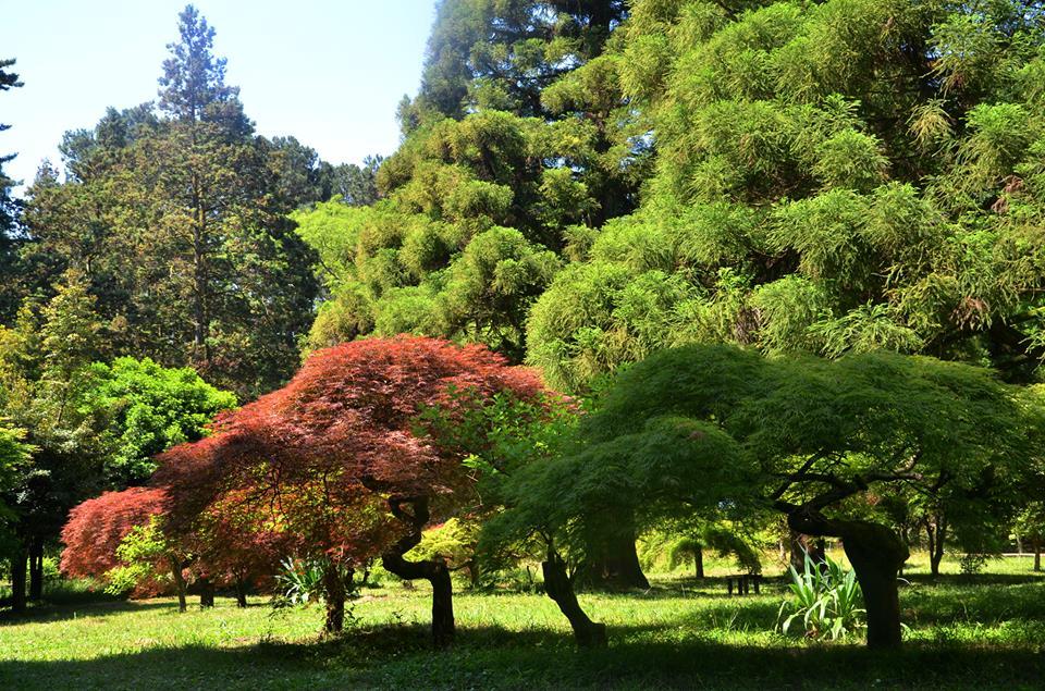 ბოტანიკური ბაღი. ფოტო ბოტანიკური ბაღის ფეისბუქის გვერდიდან