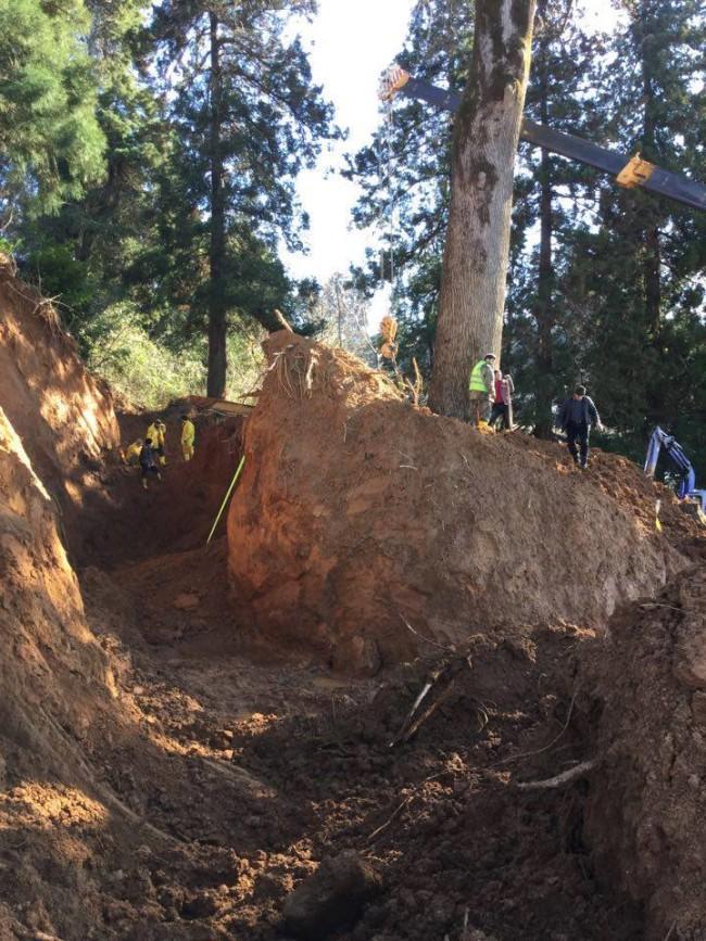 ხე, რომელიც ციხისძირიდან გააქვთ / ფოტო: ენმ