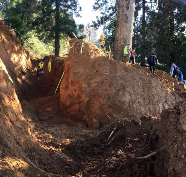 ტიტას ხე ციხისძირში, რომელიც პირველად გადაიტანეს ზღვით /