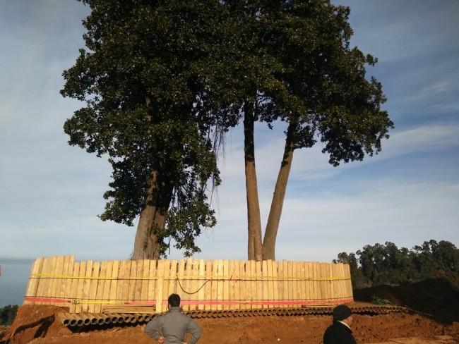 ხის გადატანა