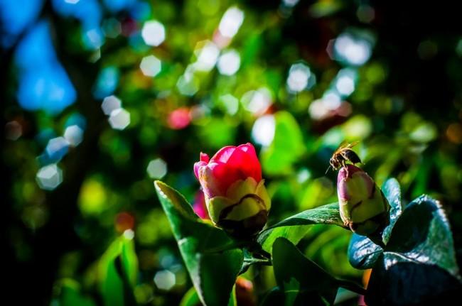 ფოტო: ბათუმის ბოტანიკური ბაღი