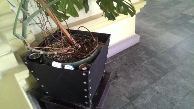 ბათუმის მერიის ცენტრალურ ფოიეში სიგარეტის კოლოფები და ნამწვავები საყვავილე ქოთანში ყრია ფოტო: ია ფრანგიშვილის