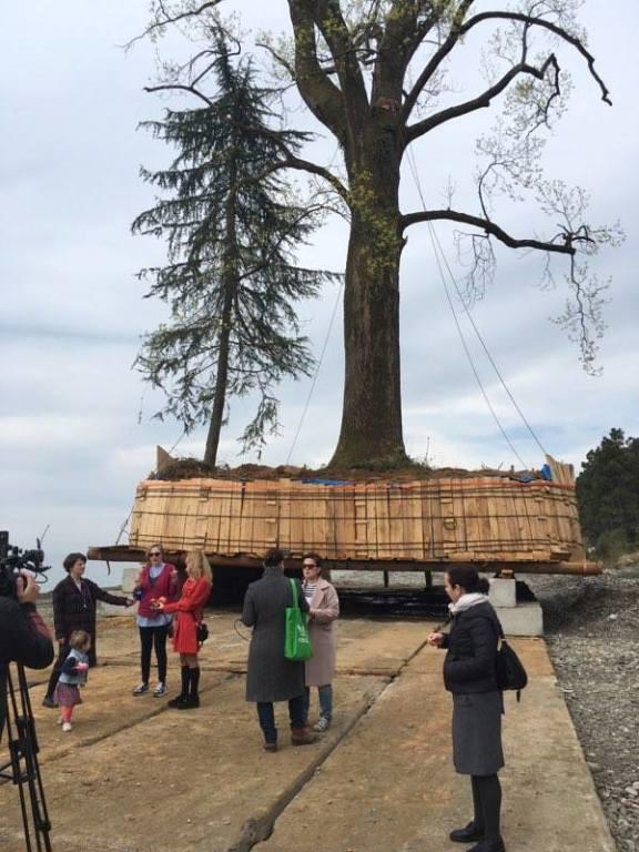 პარტიზანი მებაღეების და დაიცავი ძველი ბათუმის საპროტესტო აქცია ხეების გადატანის წინააღმდეგ