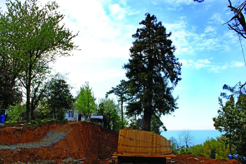 ციხისძირში ხის ამოღების გამო, შესაძლოა, ეს სახლი საცხოვრებლად საშიში გახდეს. მანანა ქველიაშვილის ფოტო