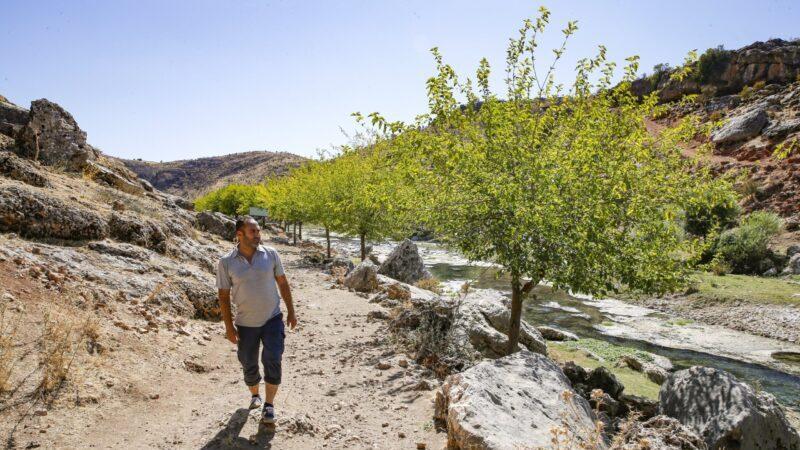 3 ათასი ხე 8 კილომეტრზე – ერთი ადამიანის 23-წლიანი ძალისხმევა