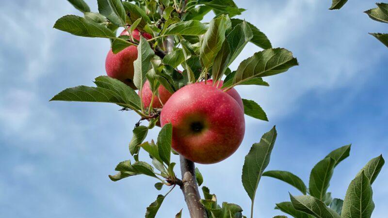 12 წლის ბავშვს ხილის უნებართვოდ მოკრეფისთვის სცემეს და გაშიშვლება აიძულეს – PHR
